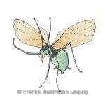 Zeichnungen und Illustrationen Jens Thomas Franke - Blattlaus